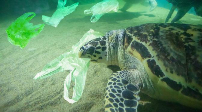 Investire con intelligenza per salvare i mari dalla plastica