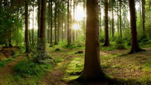 Emissioni aziendali compensate da un nuovo bosco