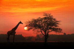 Mercati africani, quali sono le nubi all'orizzonte