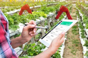 Il futuro dell'agricoltura? È nell'intelligenza artificiale