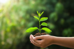 Nasce il bosco di Etica Sgr per ridurre lo smog a Milano